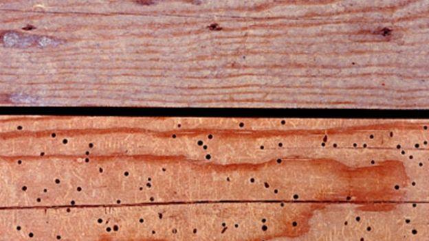 Suggerimenti per eliminare i tarli dai mobili - Fiore Antichità